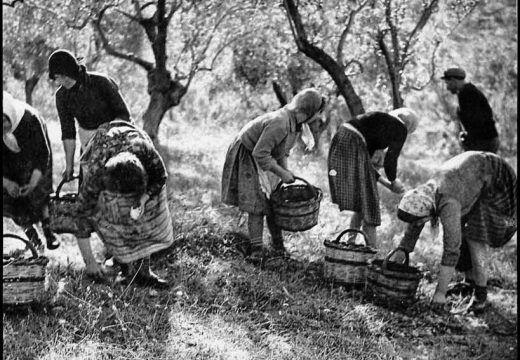 ΔΗΜΗΤΡΗΣ ΛΕΤΣΙΟΣ - Ο Φωτογράφος του Θεσσαλικού Κάμπου - radioaetos.com