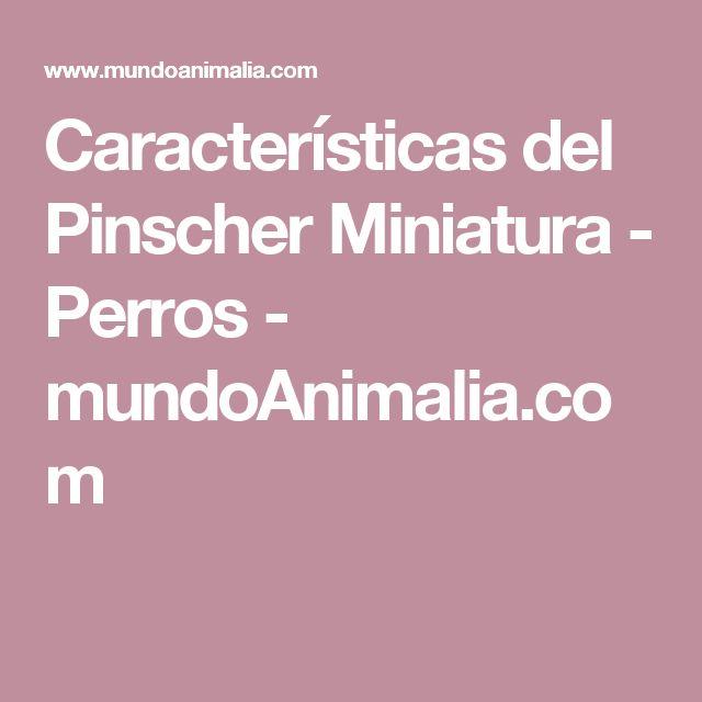 Características del Pinscher Miniatura - Perros - mundoAnimalia.com