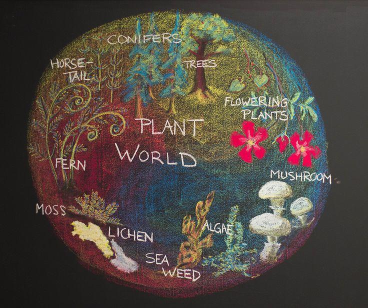 Age 11 ~ Botany ~ Plant World