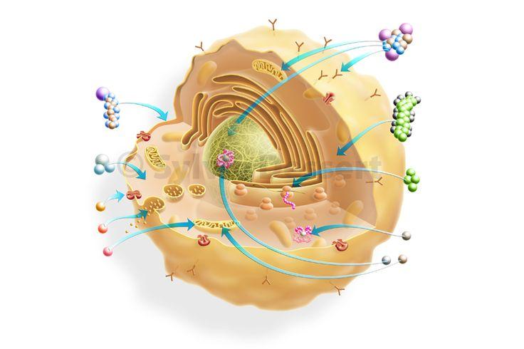 Cellule - Besoins primaires