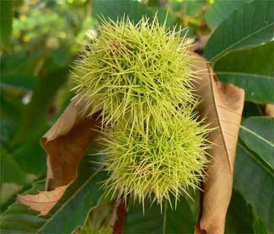 Flores y frutos de otoño