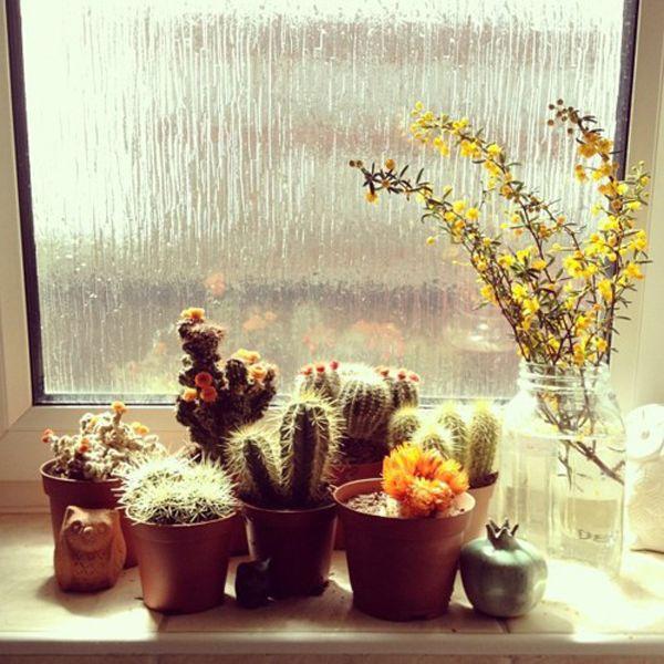 Window cacti garden