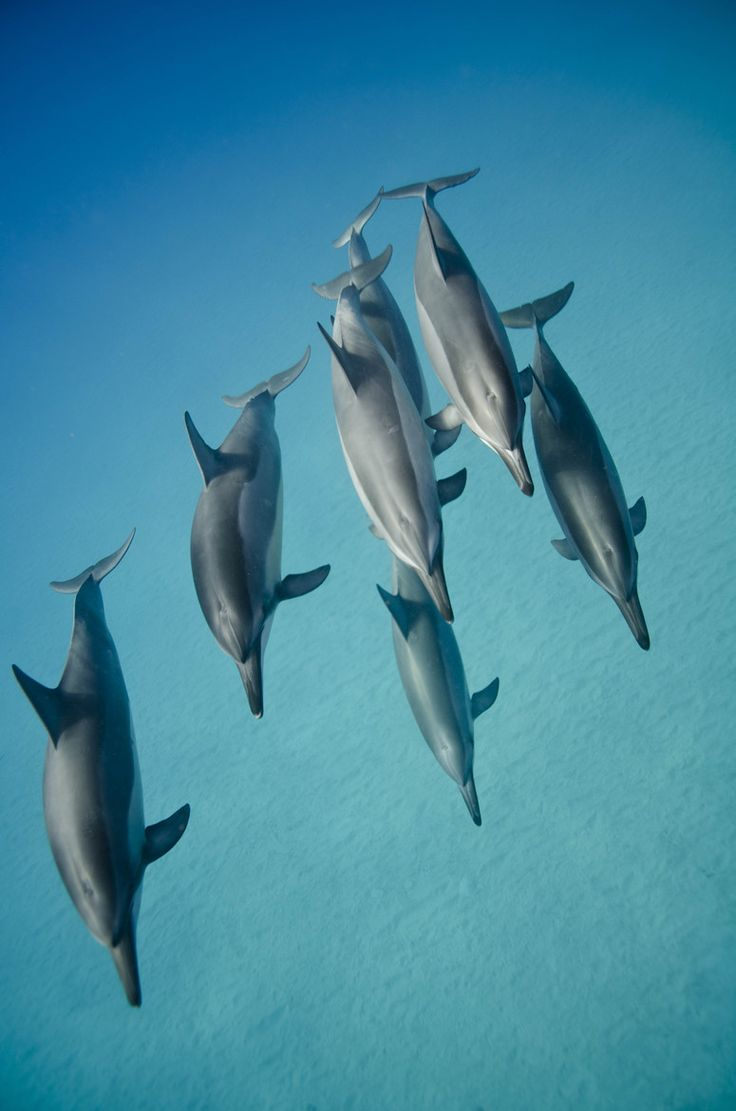 169 best dolphins images on pinterest dolphins animal rights