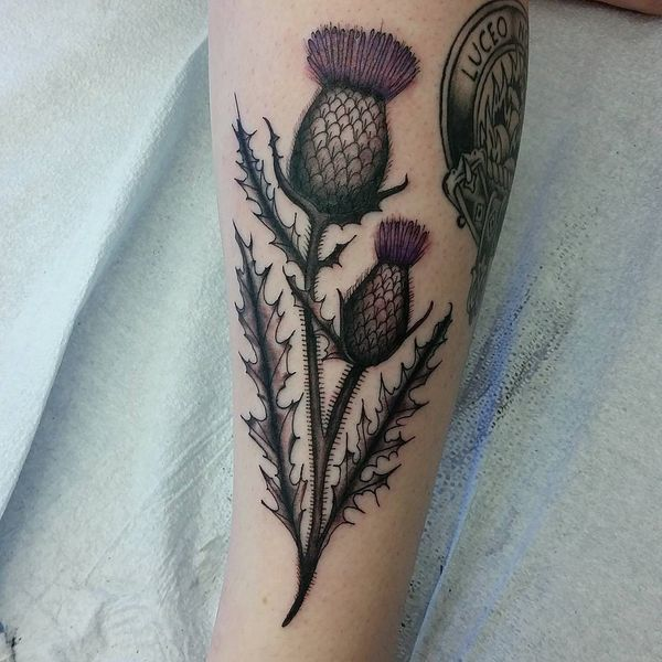 Scottish Heritage Tattoos: Best 25+ Thistle Tattoo Ideas On Pinterest