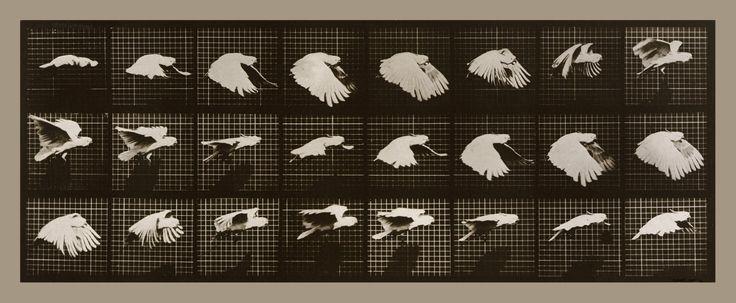 Muybridge- Edward Muybridge conseguiu animar adaptando o termoscropio.