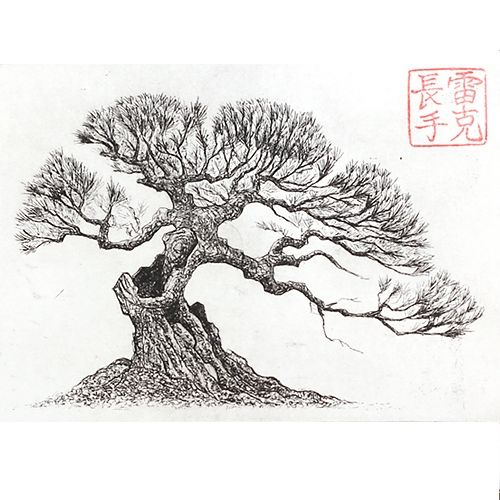 japanese pine tree drawing - Google Search