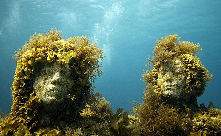 Les faux récifs coralliens de Cancún sont pleins de vie ! Une réussite!