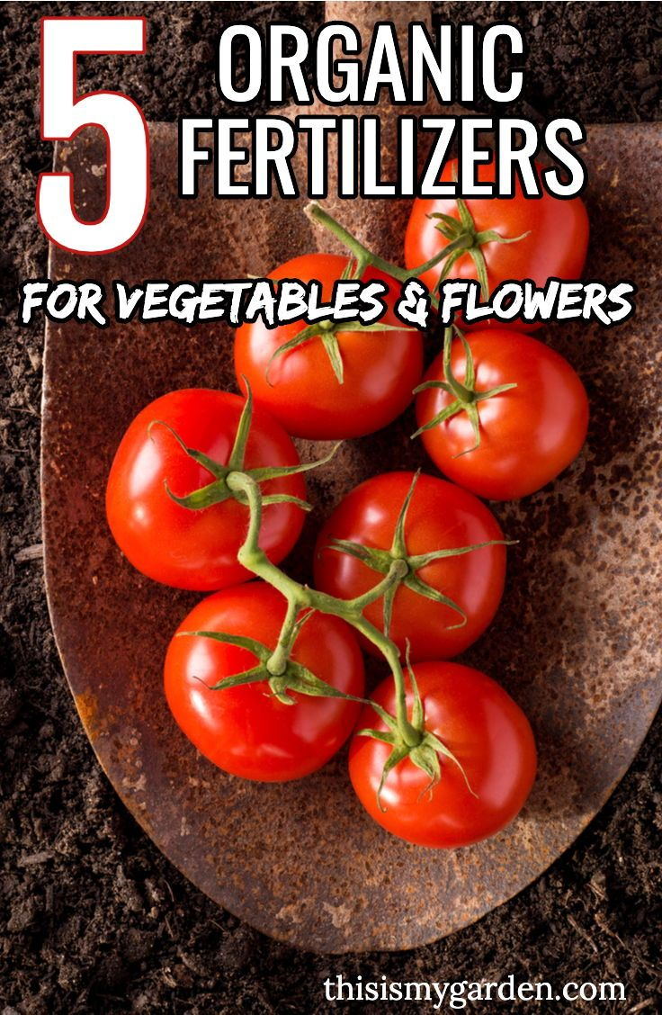 5 organic fertilizers to power your vegetable plants