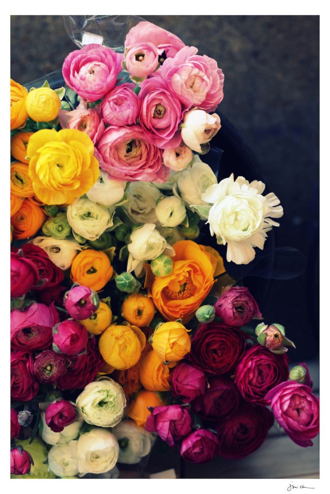 Loads of Ranunculus - Sweet Eventide - $95.00 - domino.com