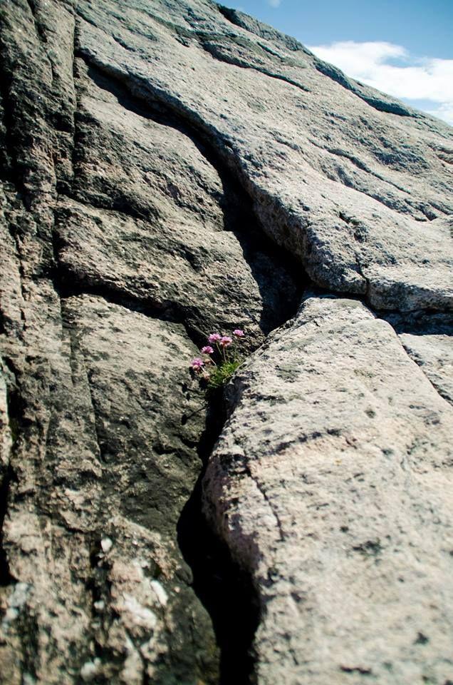 Flowers in Rock in Norway