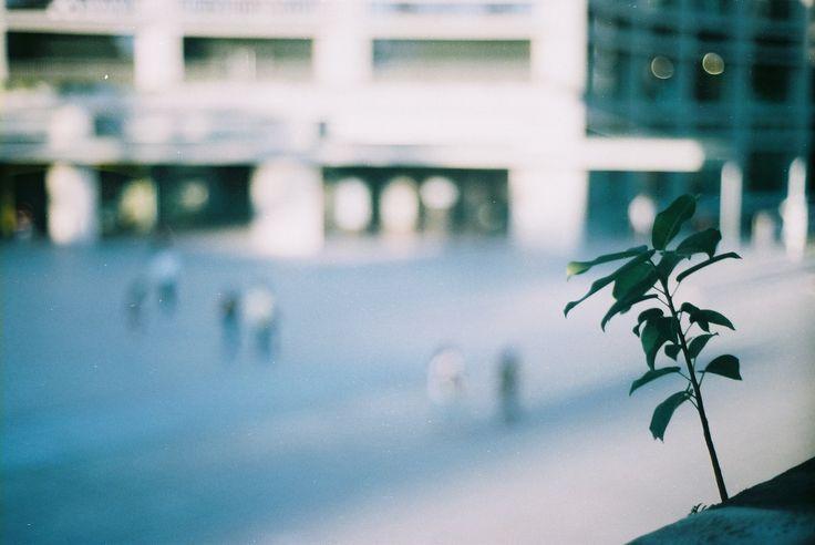在牆角外也依然努力成長的小樹 | by Hsien hui Tsai