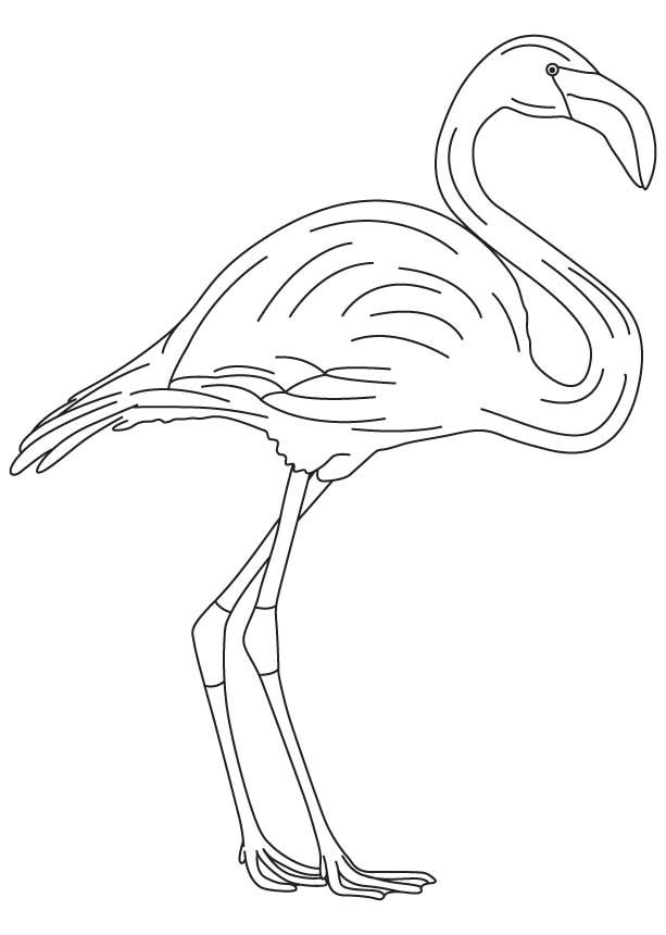 The 25 best flamingo coloring page ideas on pinterest flamingo flamingo coloring pages long legged flamingo coloring page pronofoot35fo Images