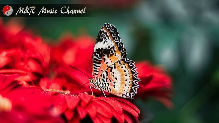 Morning Music For Harmony, Relaxation and Inspire Creativity - By Medita...