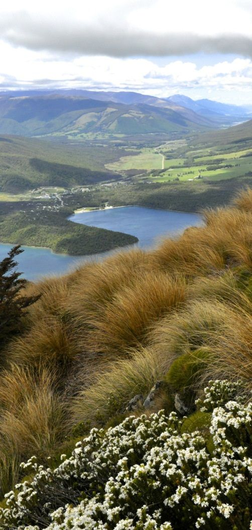 Overview - New Zealand