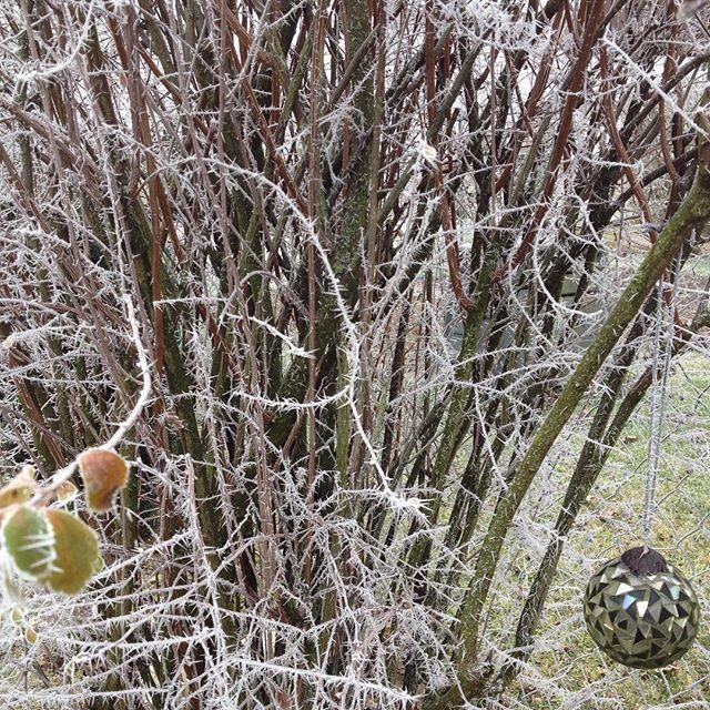 #brush#strauch#garden#nature#garten#naturelovers#natur#rauhreif#rime#frost##hoarfrost#whitefrost#kugel#glaskugel#spiegeln#scherben#gartengestaltung#gardendesign#reflection#leaves#blätter#outdoor#silence#ruhe#stimmung#achtsamkeit#mindfulness#winter#naturelovers#gartenliebhaber#äste