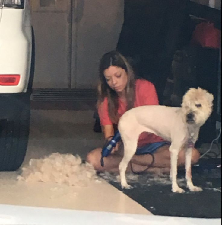 This Mom Shaved The Family Dog And Now It's A Straight-Up Llama