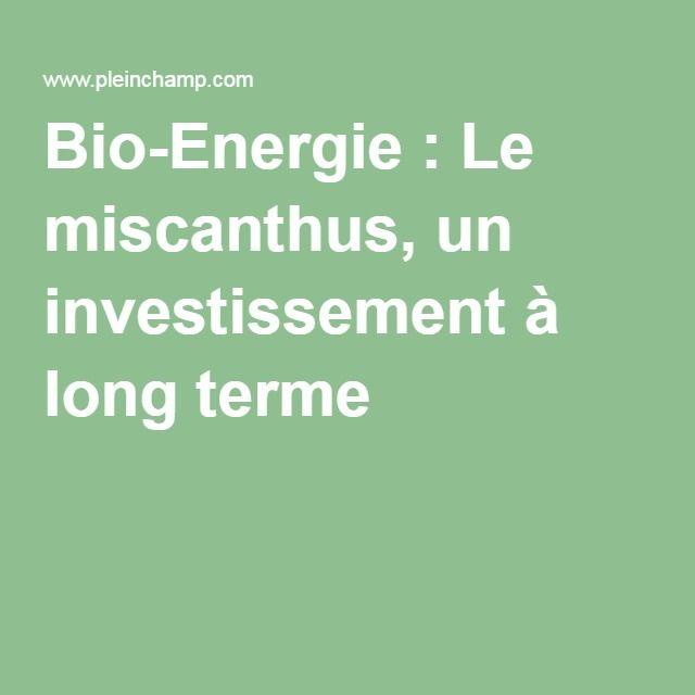 Bio-Energie : Le miscanthus, un investissement à long terme