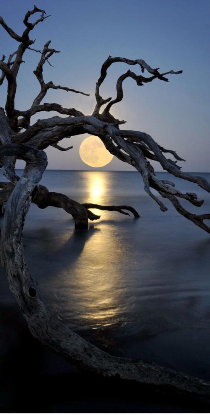 la pleine lune, paysage unique de la pleine lune et bois flotté