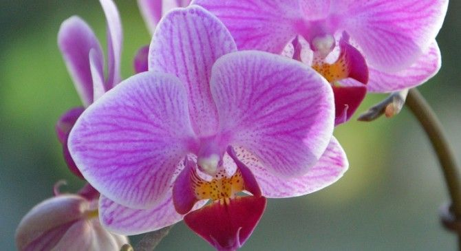 Wild Orchids in Sardinia.   This weekend is ideal for flora lovers and particularly to whoever is interested in wild orchids, or wishes to be. Sardinia features more than 50 varieties on its territory. Charming,antique hotel with inner patio. Call us fo more details!  #flowers #orchids #sardinia #travel #holiday