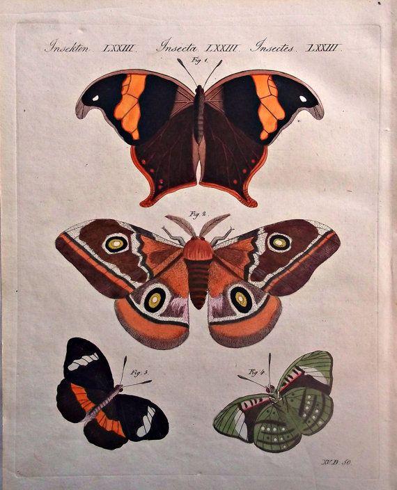 1790 1810 Gorgeous Antique Print Quot Foreign Butterflies