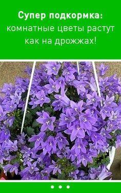 После такой подкормки комнатные цветы растут как на дрожжах!