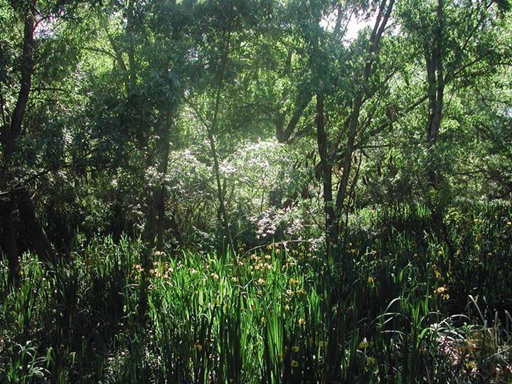 Ana Patricia Hesse: El corazón de las islas, verano. Parque Lujan, sendero las luciérnagas.