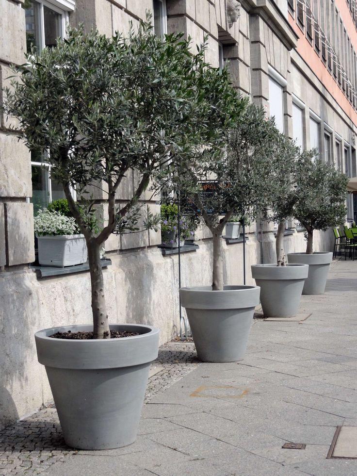 Olivenbäume in Reih und Glied und ton-in-ton mit edlen Töpfen, Fassade und Pflasterplatten.