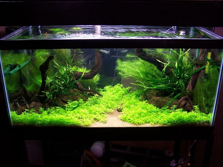 The Easy Freshwater Aquarium Guide