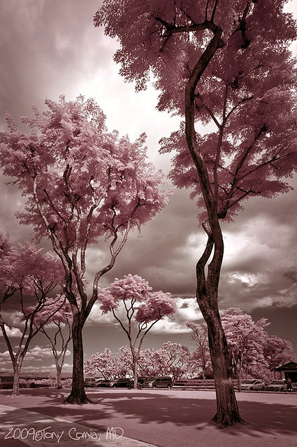 I want pink trees!