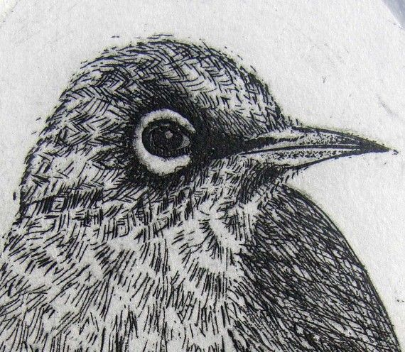 Original Etching, New Zealand bird engraving