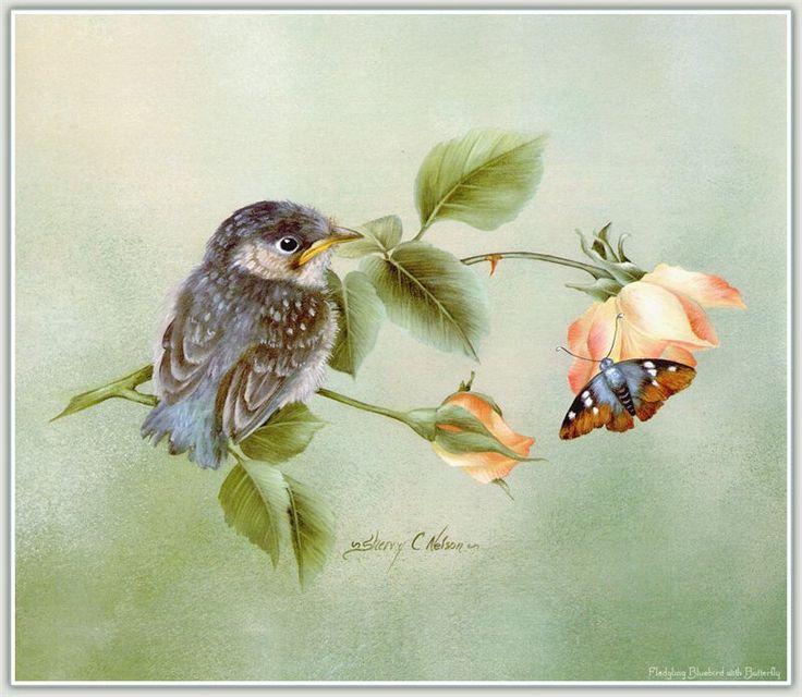 Открытки птичек, открытки для дочери