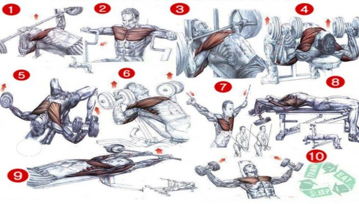 Chest Workout Chart - Best Fitness Workout Healthy Body ...
