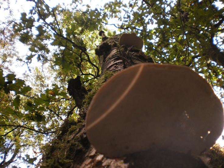 Bij een mooie nazomer krijgen paddestoelen de kans om te floreren. Op 22 september ging een groepje cursisten van het IVN Nijmegen op pad door het gebied van de Hatertse Vennen. Tijdens de wandeling kom je al verschillende paddenstoelen tegen, sommigen zijn eetbaar en van anderen word je ziek. Lees meer: http://www.karmijntekst.nl/paddenstoelen-bij-de-hatertse-vennen/