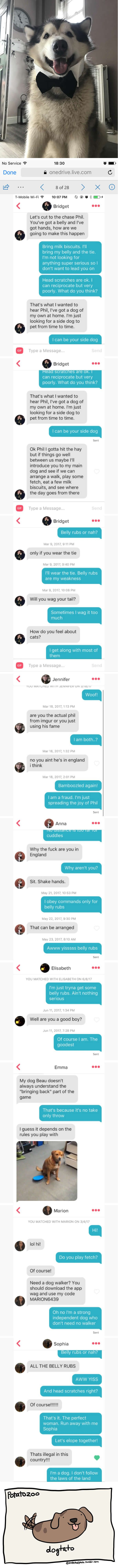 Dog Owner Creates Tinder Profile For His Malamute Phil And Their Conversation Is Cute AF