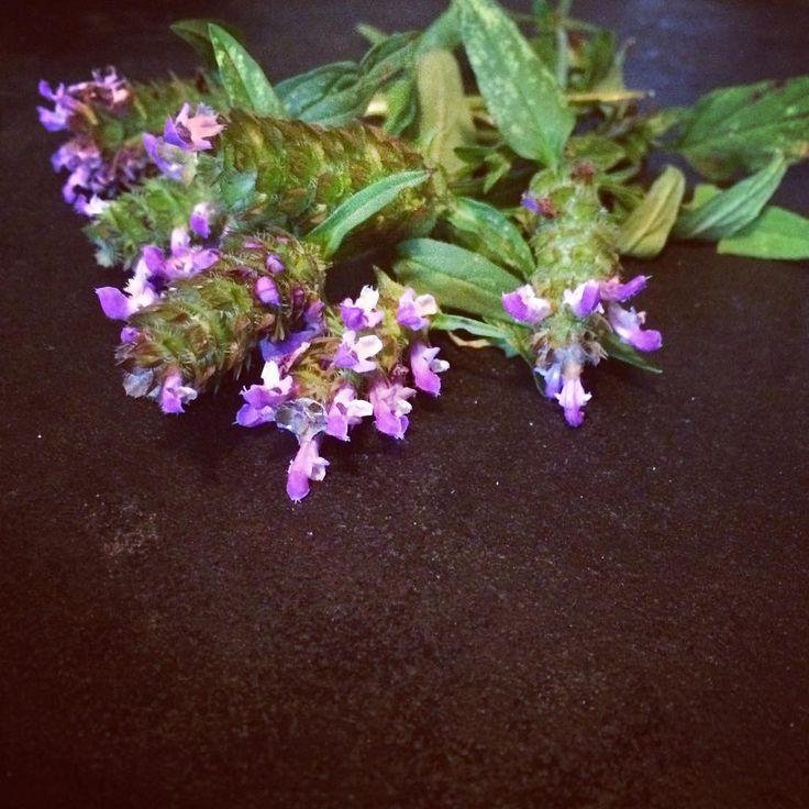 Self Heal #herb