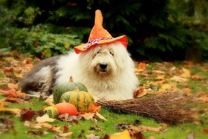http://www.mascotasblogueras.com/curiosidades/halloween-y-nuestras-mascotas