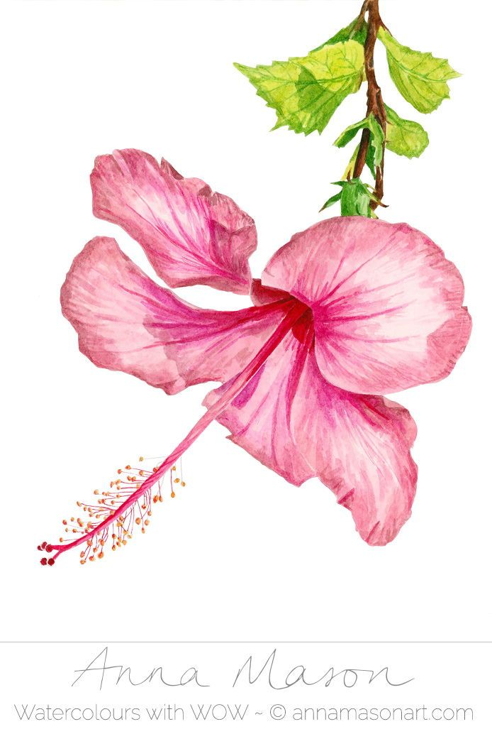 Learn To Paint This Cheery Hibiscus Step By Step With My Latest Online School Tutorial Hibiscus Flower Drawing Flower Drawing Flower Painting