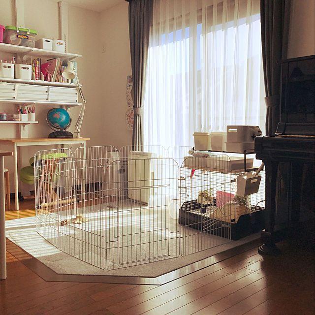家族の 部屋全体 うさぎと暮らす うさぎ ネザーランドドワーフ うさぎのいる生活 うさぎのお部屋についてのインテリア実例 うさぎさんの居場所 2018 01 30 10 18 01に共有されました กระต าย