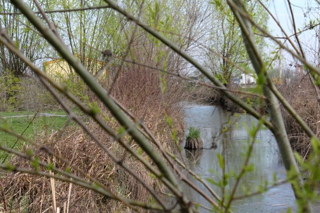 A view of the pond through the branches / Una vista dello stagno fra i rami.