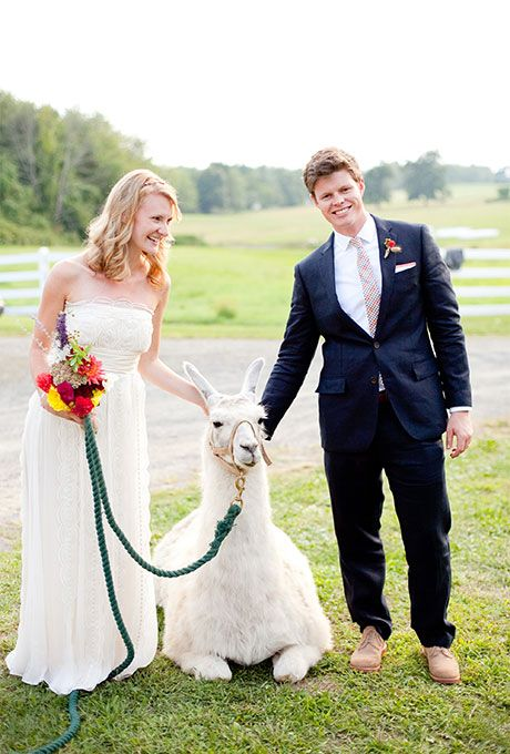 Bride and Groom with Llama Ways to Include Your Pet in the Wedding | Brides.com