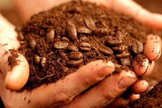 Reutilizar desechos del cafe: brillo del cabello, repelente, control de plagas, olor de tuberias.. CoffeeGrounds