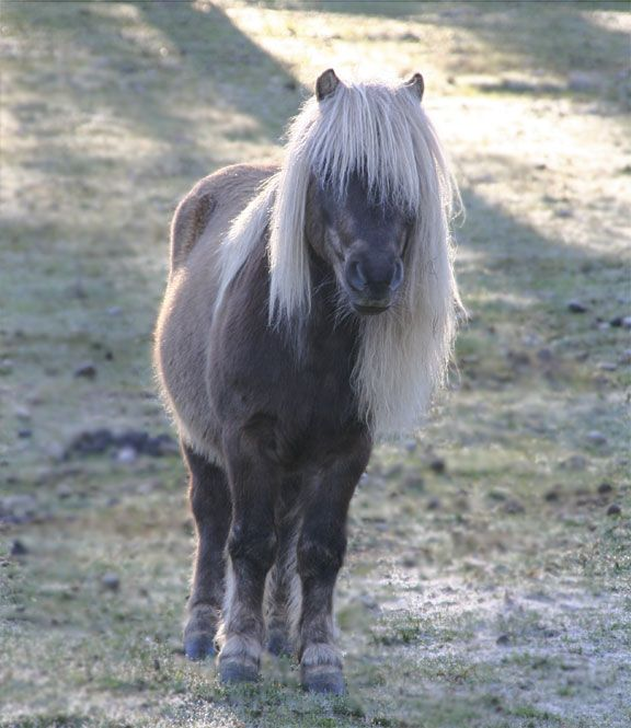 Our tiny stallion, looking so handsome