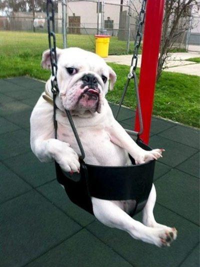 Dog on swingset