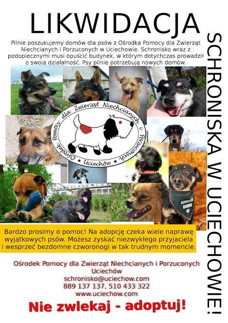 #psy #schronisko #dog #shelter #help #adopt