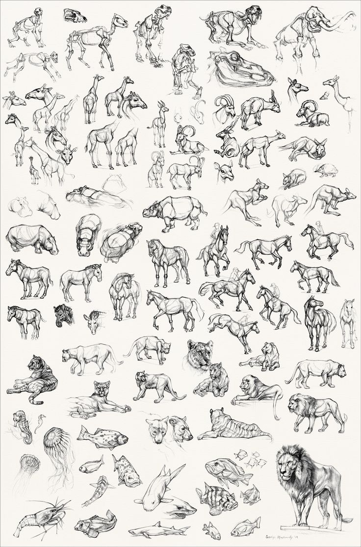 Uncategorized Draw An Animal 298 best animal images on pinterest drawings drawing tutorials coloring for kids category construct draw animals easy with