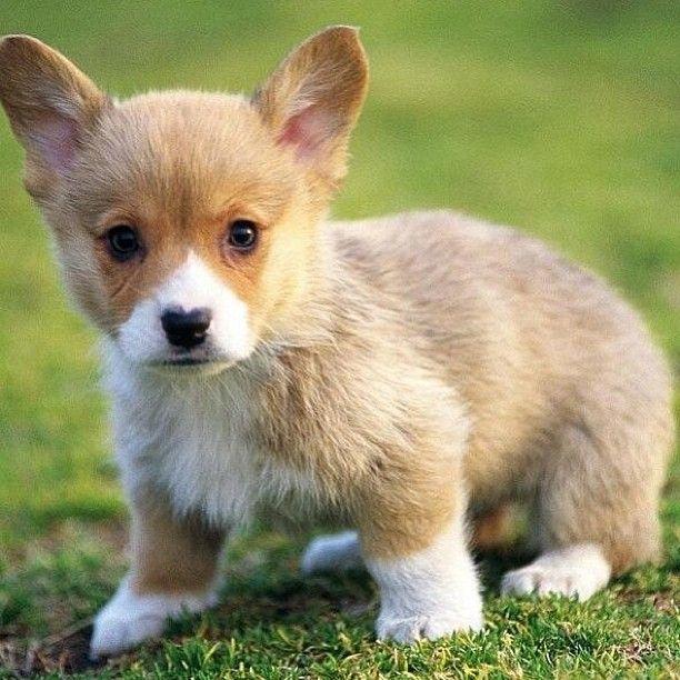125 best Alle hondenrassen die ik leuk vind./All dog ...