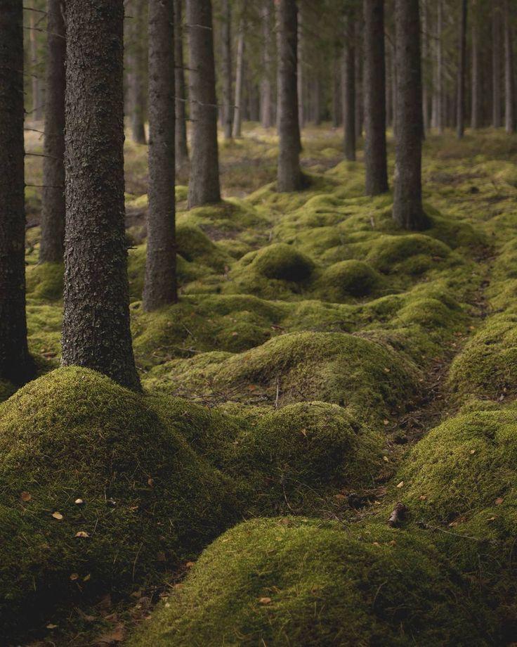 Hur fint är det inte med mossa i skogen? 🌲  #mossa #skog #skogen #forest #trees #naturfoto #friluftsliv #iskogochmark #mystic #mystical #visitvärmland #värmland #karlstad #ig_varmland