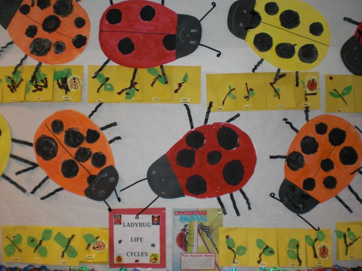 ladybug bulletin boards | Here is our finished Ladybug Life Cycle bulletin board!