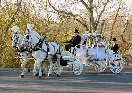 For American gypsy brides, the preferred method of wedding day transportation is horse and carriage. You can take one on a highway, right?    DCL