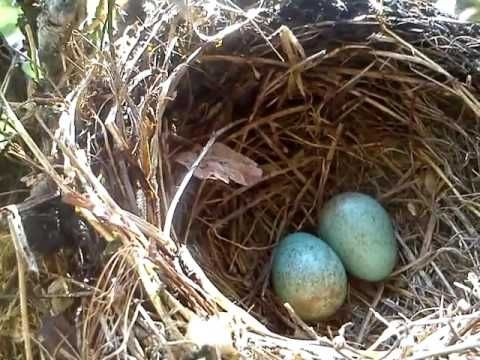 Vajíčka v bonsaji